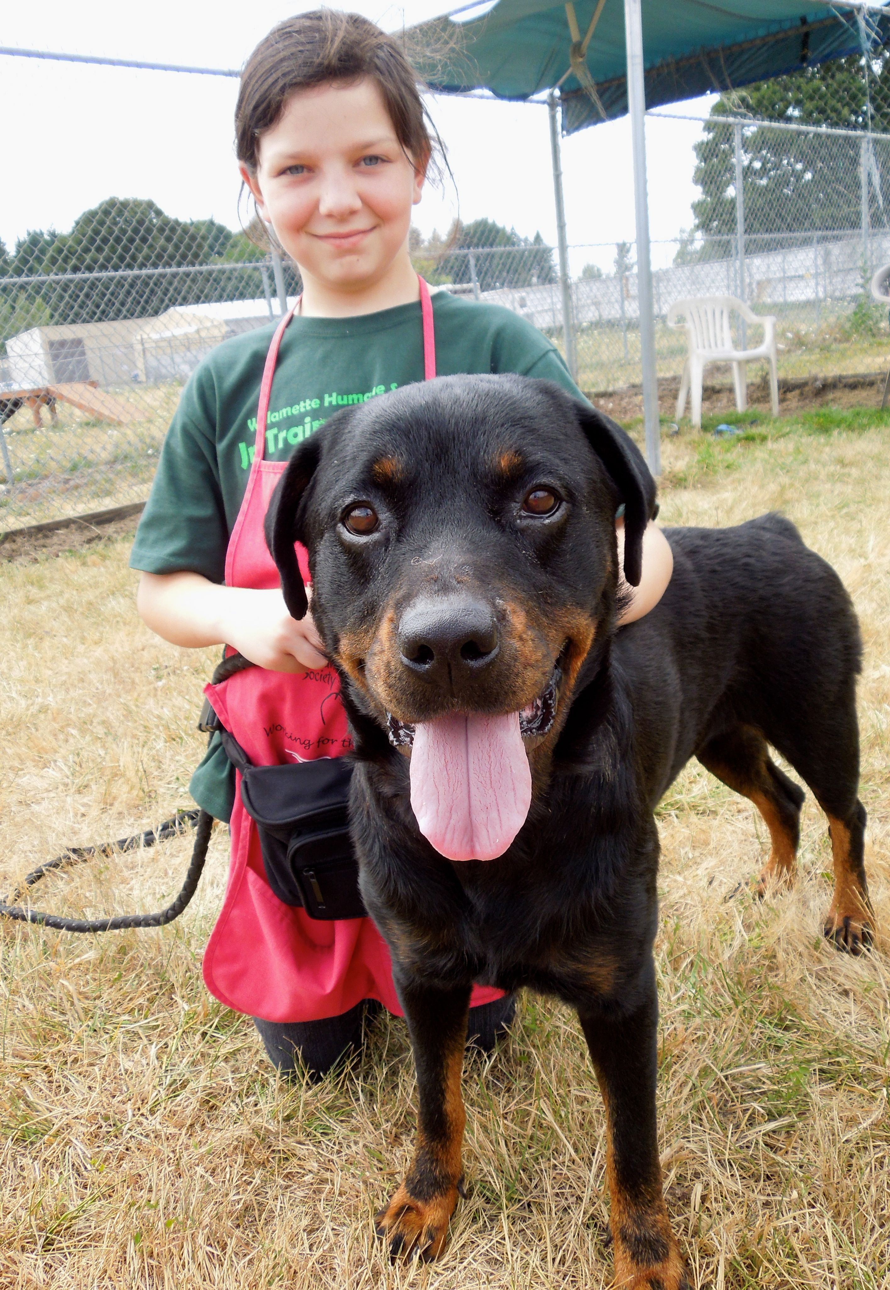 this week�s featured adoptable dogs willamette humane