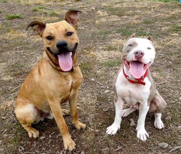 Faye and Jax 2