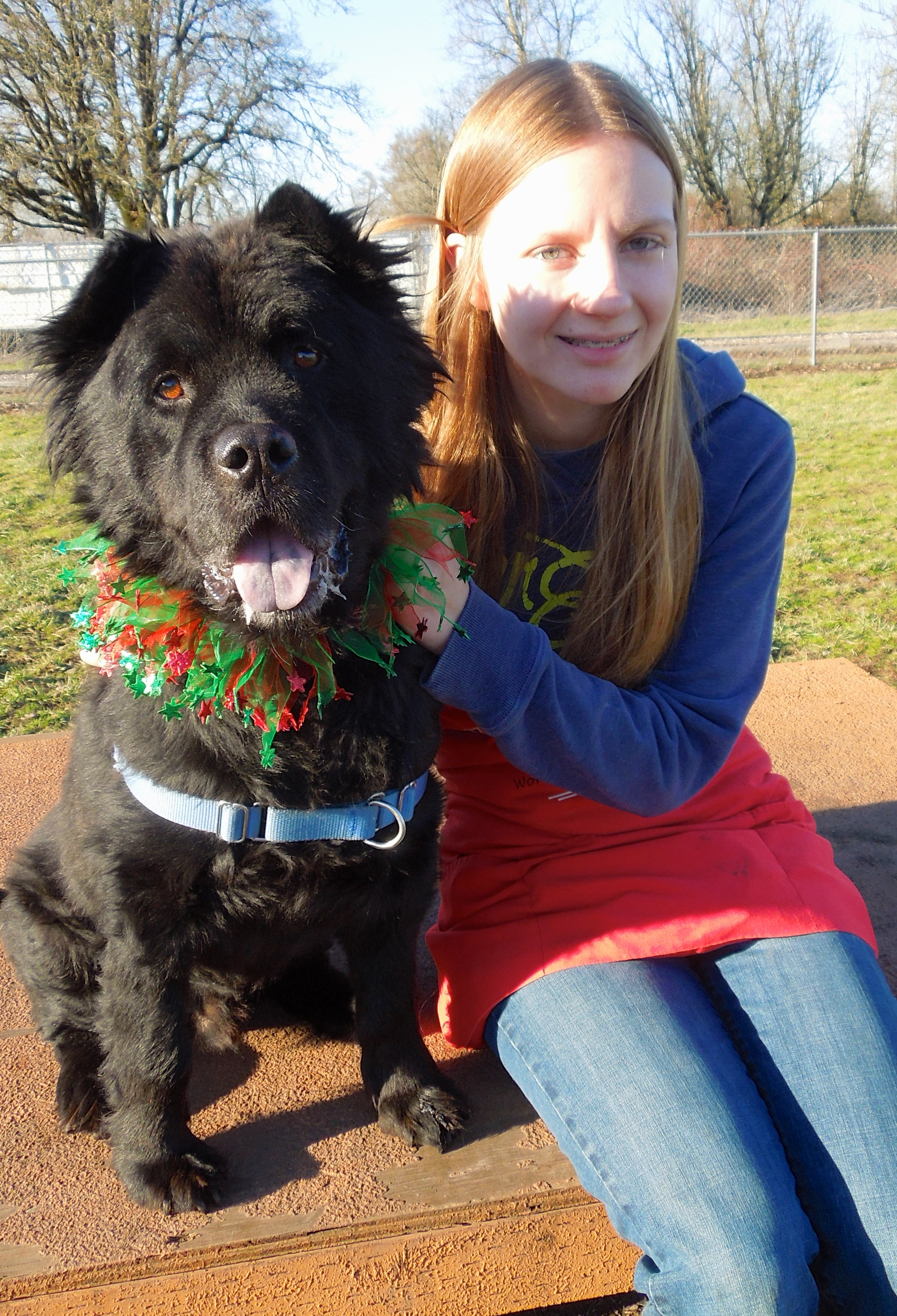 This Week S Featured Adoptable Dogs Willamette Humane