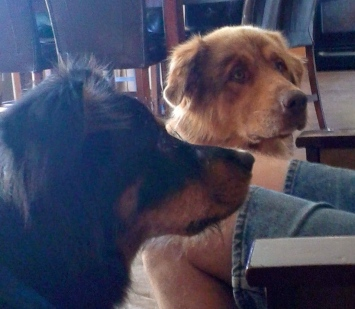 Scrappy and Gryff