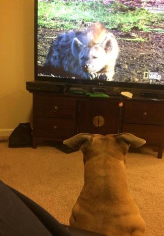 Destiny watching TV