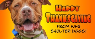 Happy Thanksgiving from shelter dogs (1)