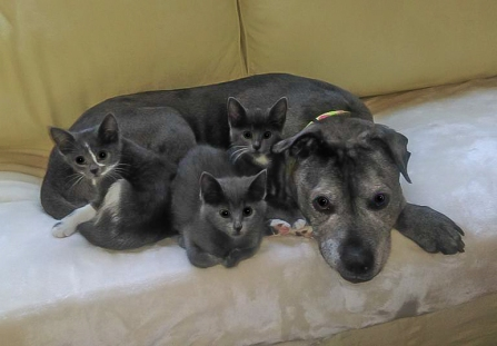 Patience and her kittens2