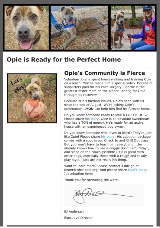 Opie Needs a Home