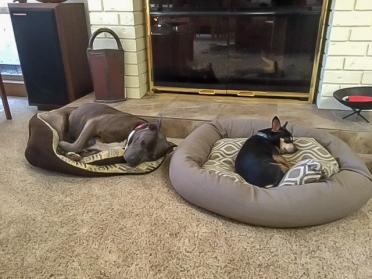 Gypsy and Riley2