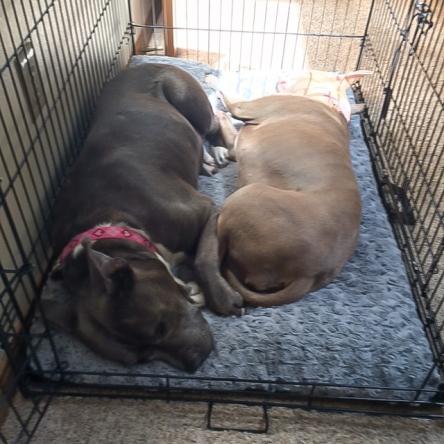 Nala and Pitunia2