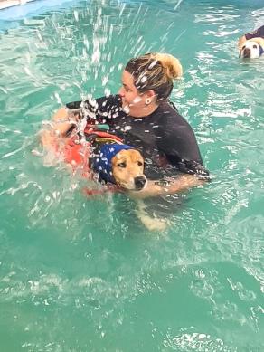 Daisy Mae swimming2