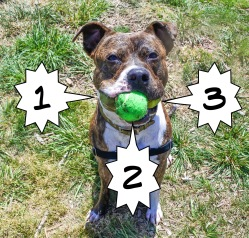 Kuckles 3 balls! (1)