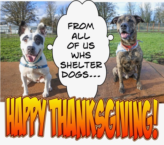 happy-thanksgiving-from-dogs2-2