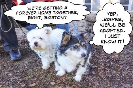 jasper-and-boston-2