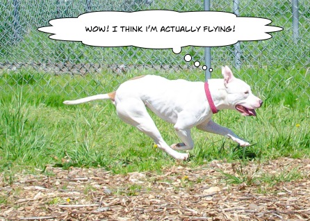 This Week's Featured Adoptable Dogs @ Willamette Humane